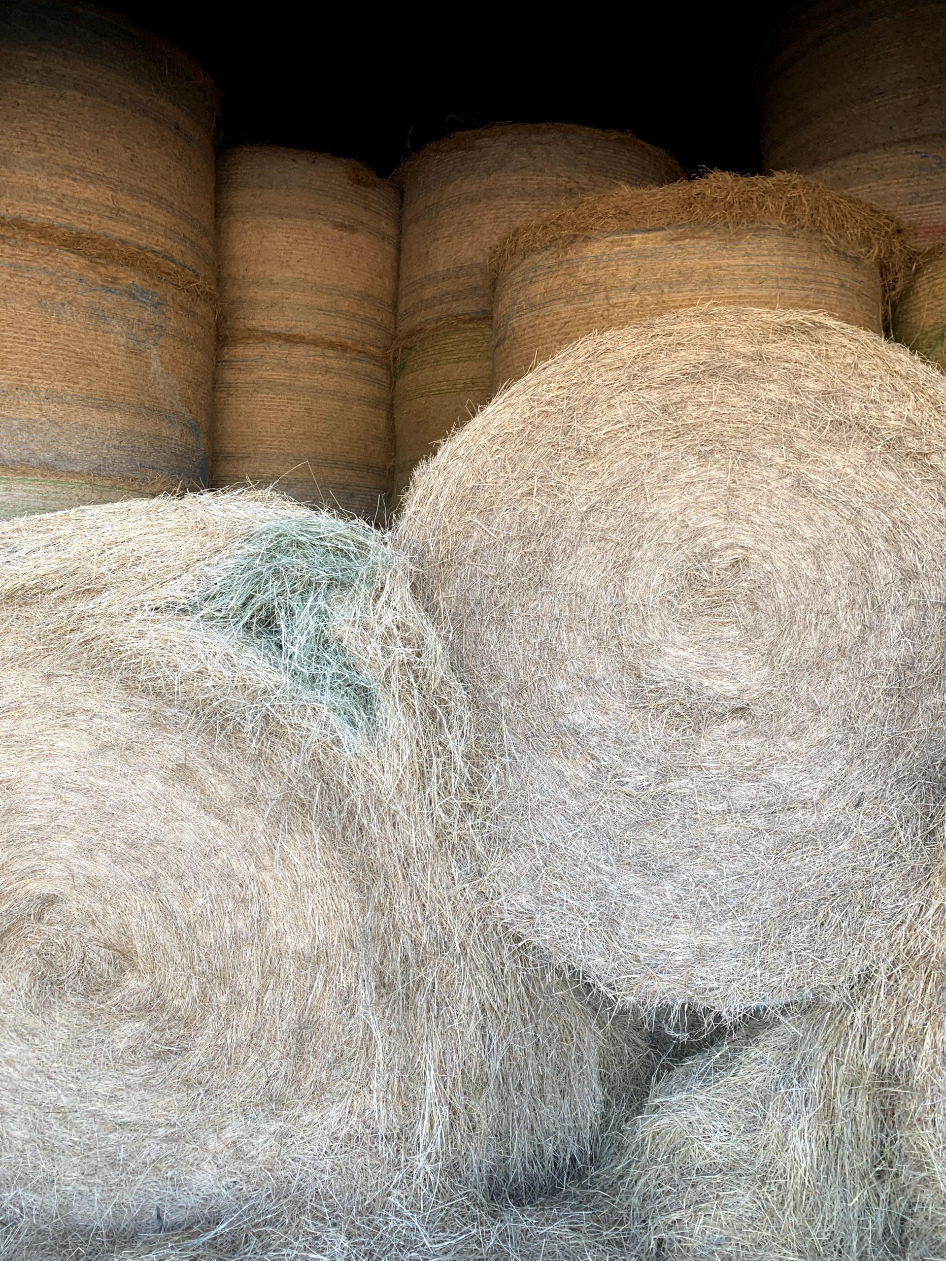 Coastal Bermudagrass Round Bale