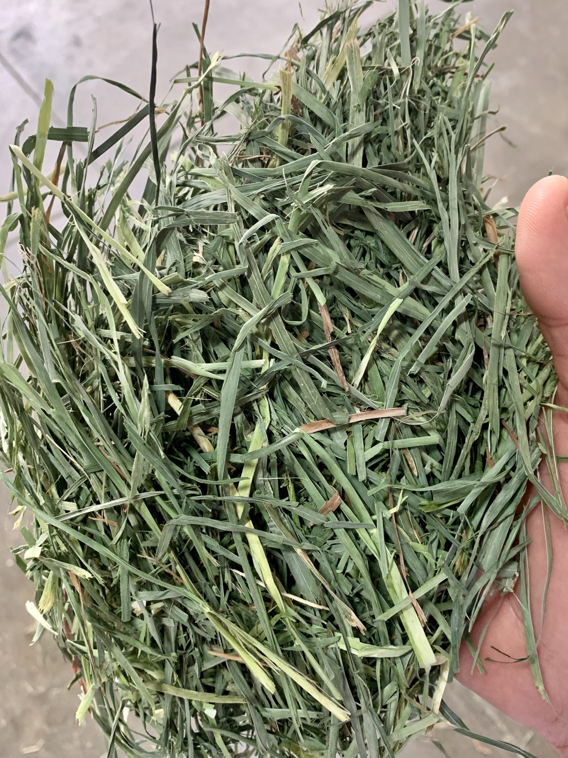 H400 | Western Orchardgrass three Tie Bale